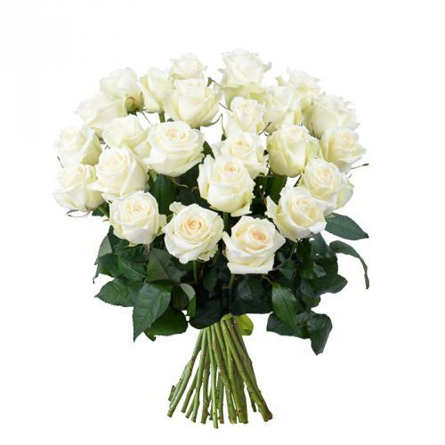 Grandes roses blanches